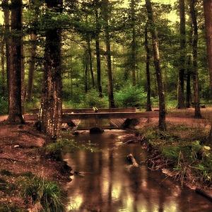 Alkisah, Sebuah Persahabatan Di Tengah Hutan 2