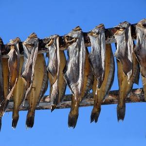 Manfaat Ikan Hampala Buat Kesehatan