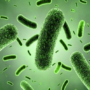 Bukan Salah Bakteri