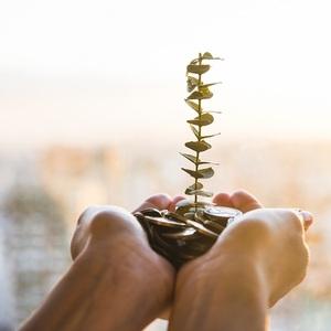 4 Jenis Investasi Yang Aman dan Pas Bagi Pemula