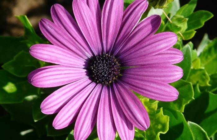 Mengenal Ragam Tanaman Hias Berbunga Untuk Bunga Potong - 2