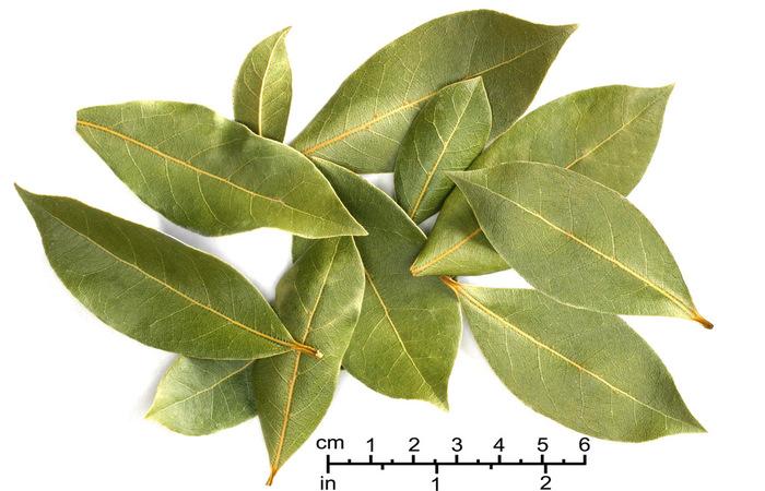 4 Manfaat mengagumkan daun salam untuk pencegahan penyakit
