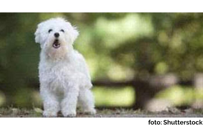 Misteri Mengapa Anjing Tidak Menggonggong Ketika Terjadi Pembunuhan Satu Keluarga di Bekasi