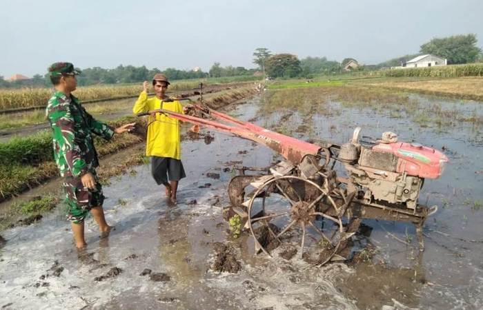 Maksimalkan Luas Tambah Tanam Koramil 0815/04 Puri Dampingi Petani