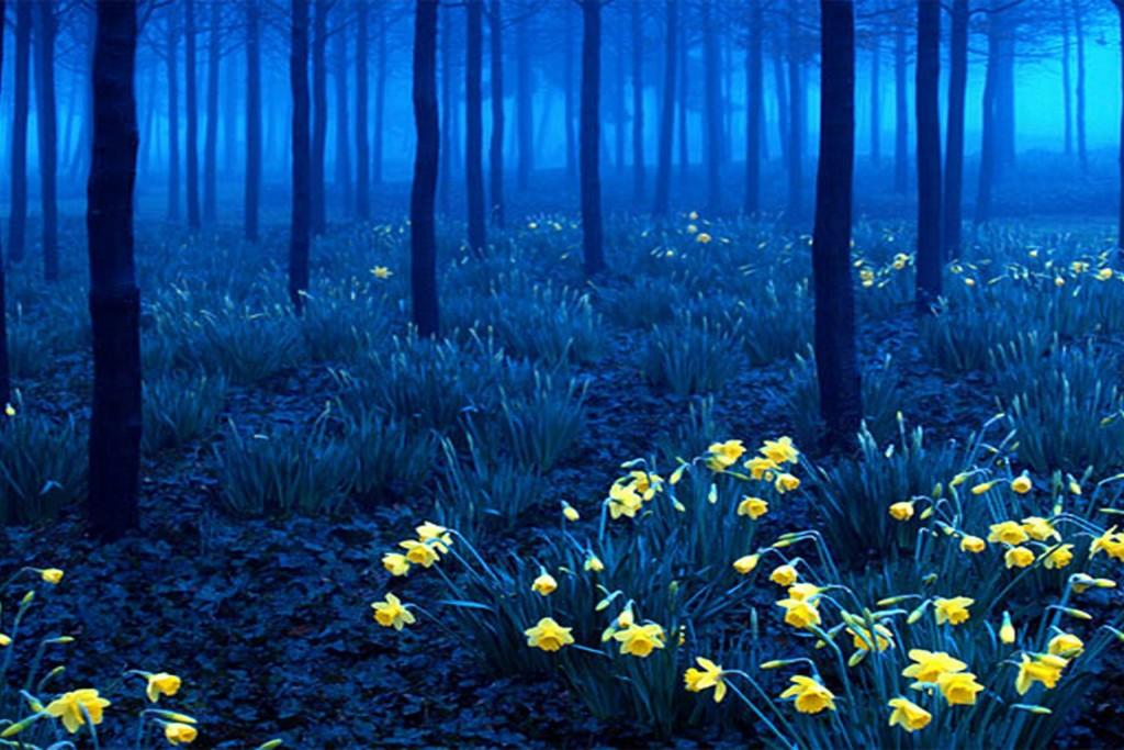10 Hutan Misterius Tapi